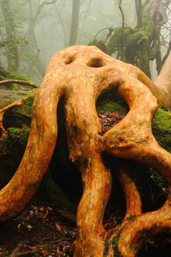 白谷イメージ原生林3